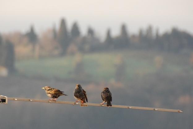 vogeltjes-antenne