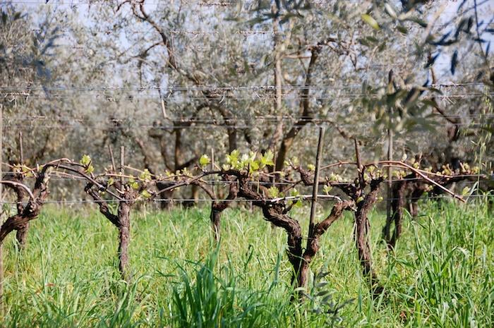 wandeling-toscane-30-maart-2014-2