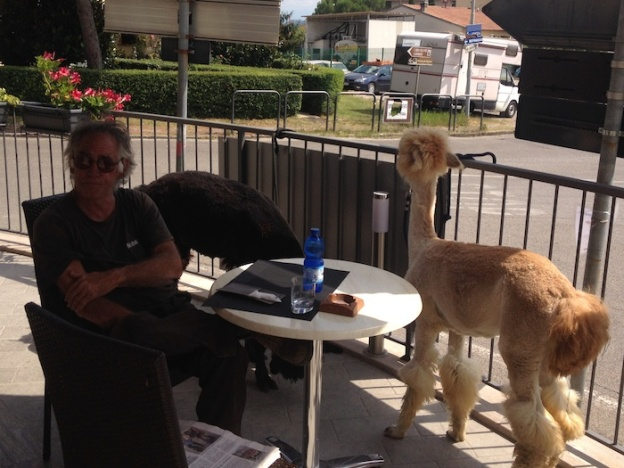alpaca-in-de-bar