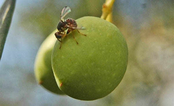 la-mosca