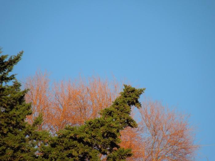 natuur-toscane-januari-3