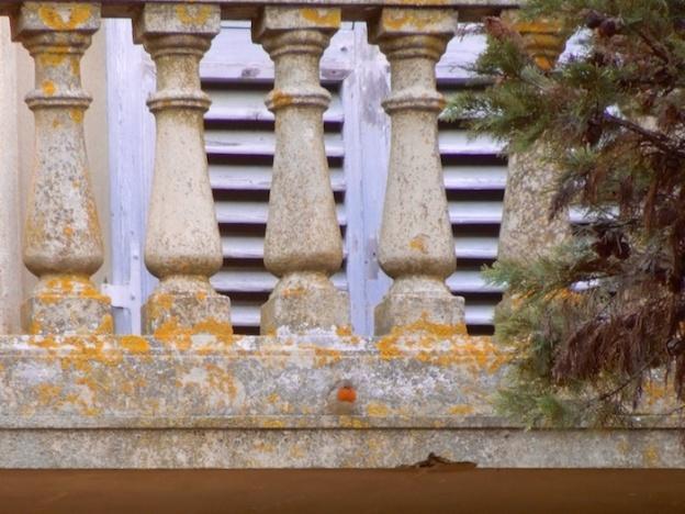 villa-adriana-roodborstje