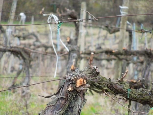 wijngaarden-eind-februari-2