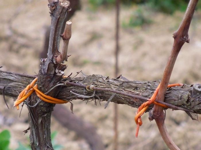 wijngaarden-eind-februari-3