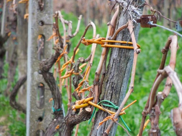 wijngaarden-eind-februari-4