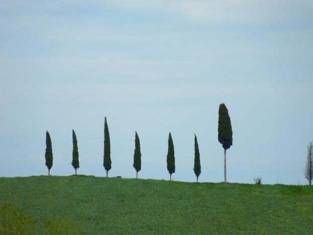 cipressen-toscane-5