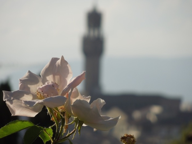 rozentuin-florence-5