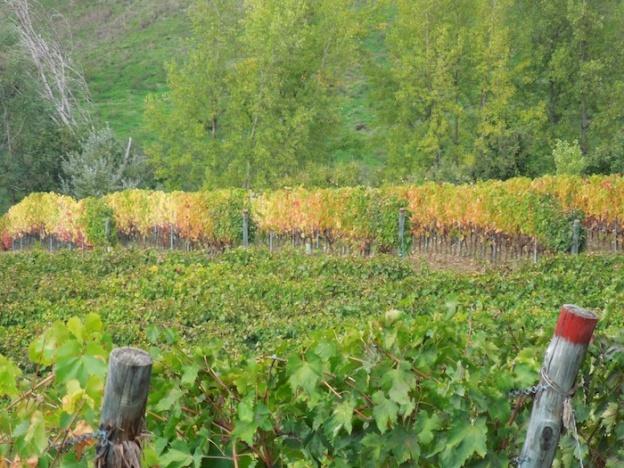 herfst-wijngaarden-toscane-2