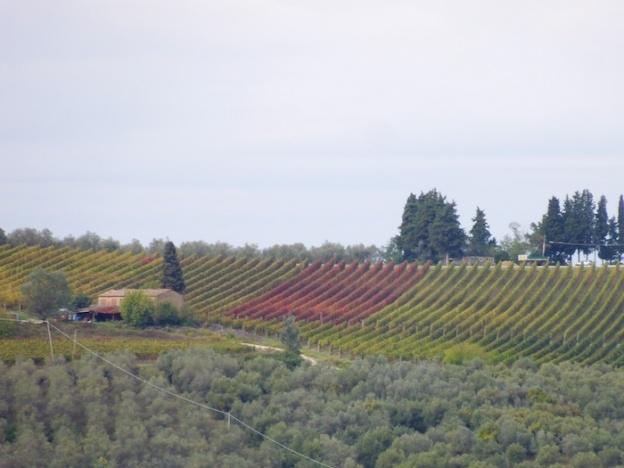 herfst-wijngaarden-toscane-5