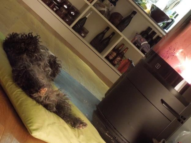 hond-toscane