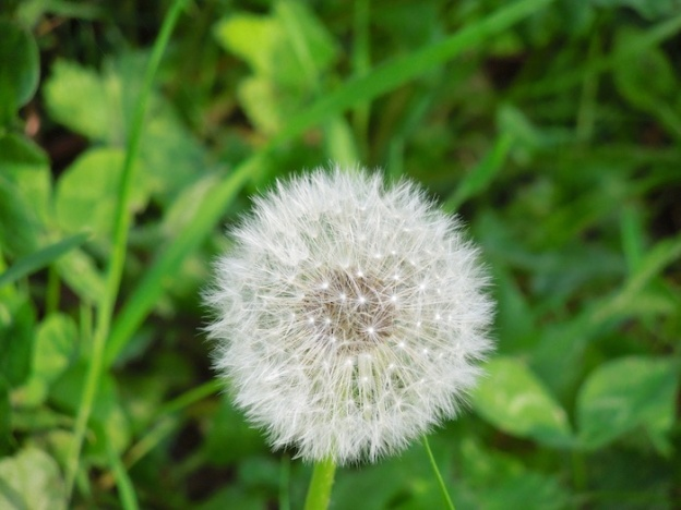 wandelen-toscane-lente-5