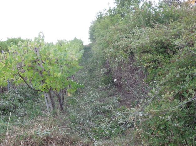olijfboomgaard-opknappen-1b