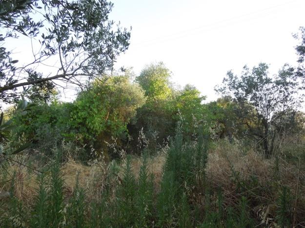 olijfboomgaard-opknappen-2a