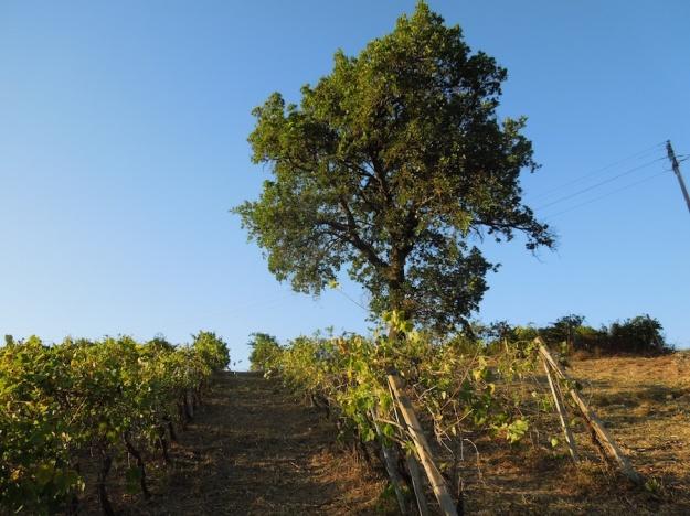 eik-wijngaard