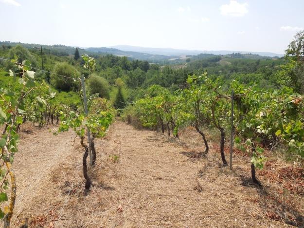 oude-wijngaard-herstellen-3