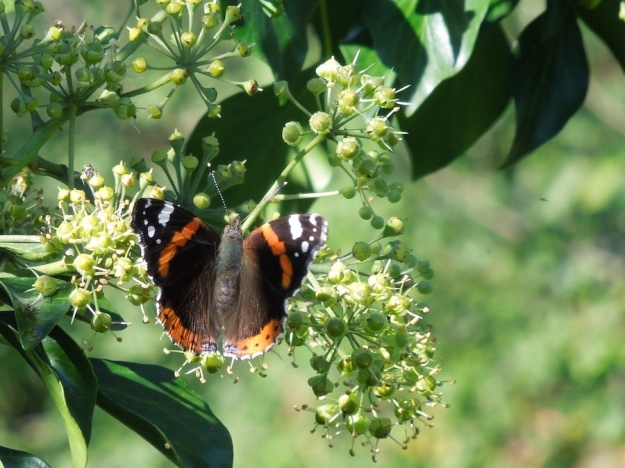 vlinder-schuim-paddestoel-zonsondergang1