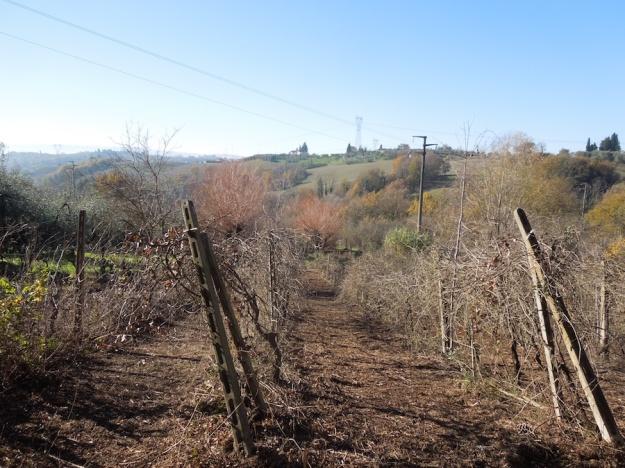 wijngaard-toscane-2
