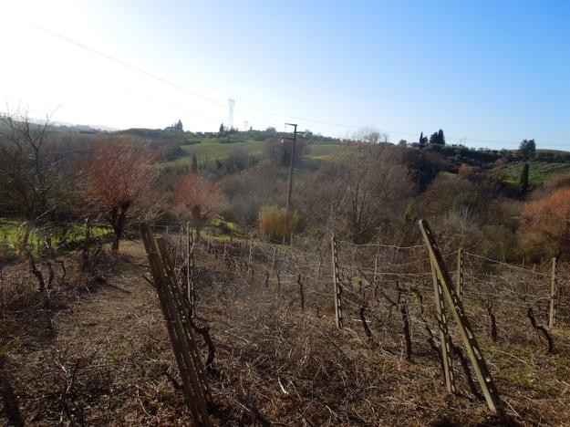 wijngaard-toscane-3