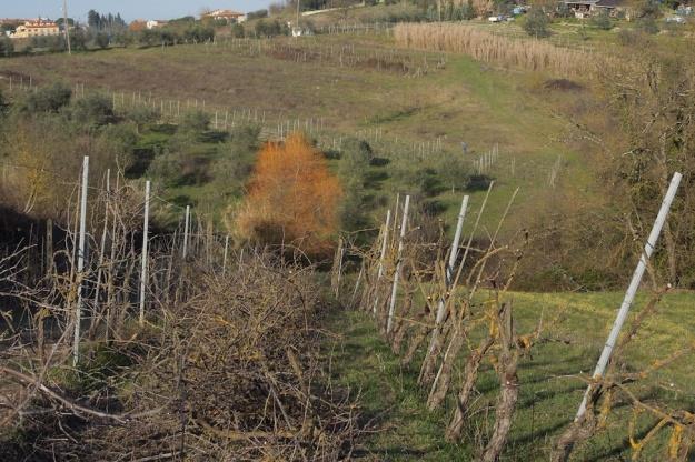 verwaarloosde-wijngaard-snoeien